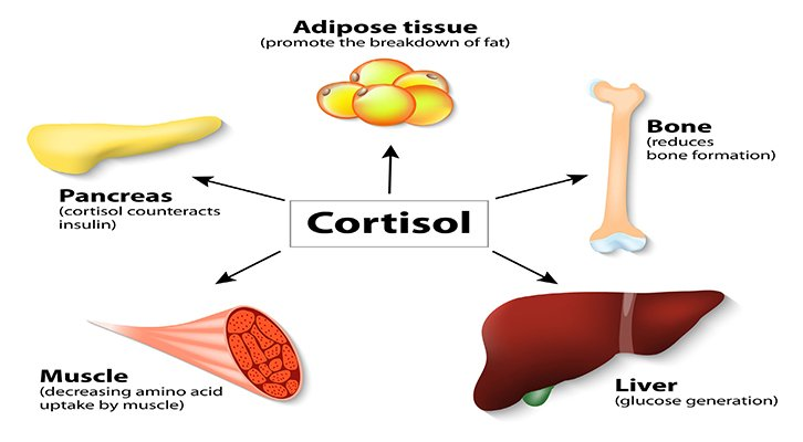 How To Lower Cortisol Naturally Renewed